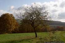 Baum im Herbst - Autumn-tree at the sunshine
