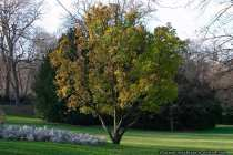 Baumbild - Picture of a tree
